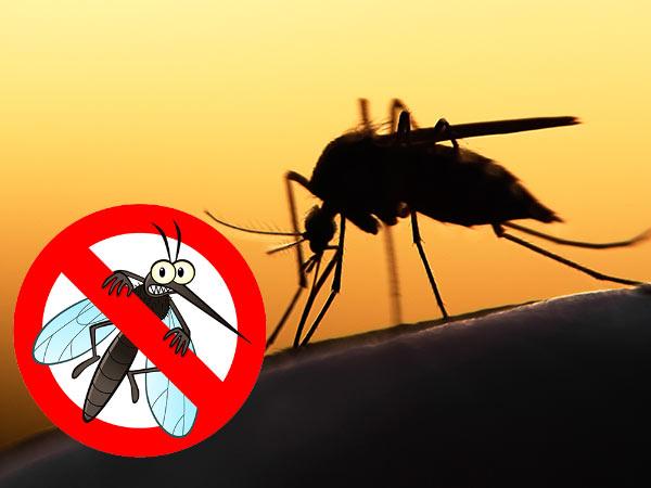 Obavijest građanima o preventivnoj dezinsekciji komaraca na području grada Nove Gradiške